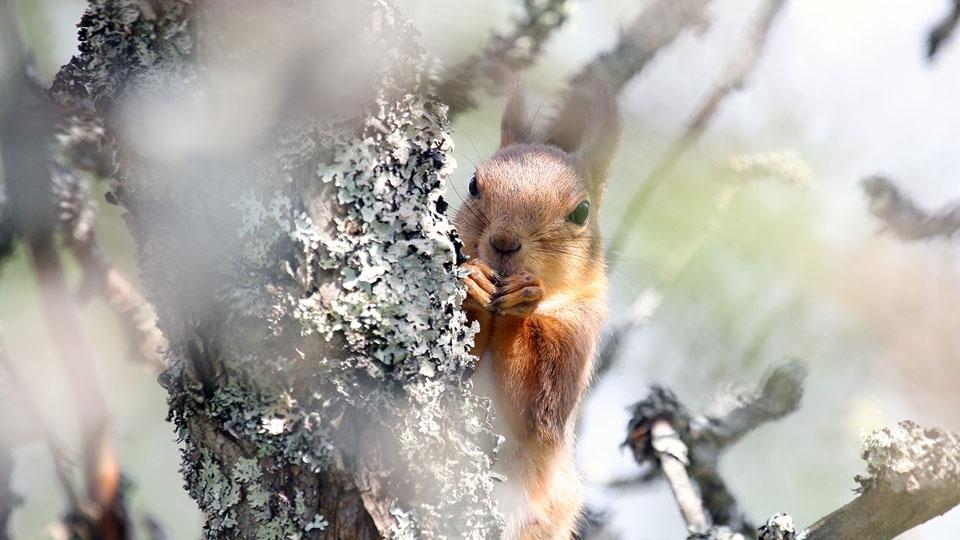 Ferienhaus-Schweden-Eichhörnchen