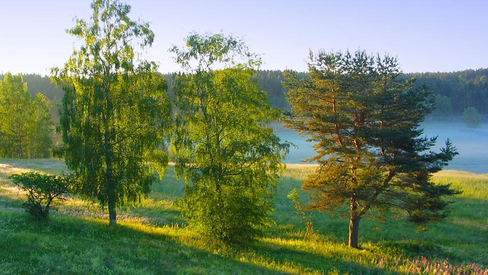 Ferienhaus-Schweden-Frühling