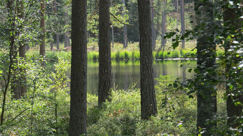 Ferienhaus-Schweden-Waldsee